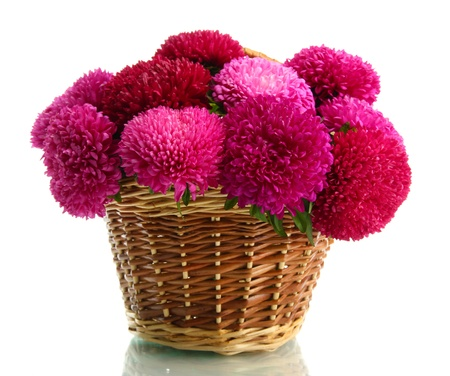 flowerhead: pink aster flowers in basket, isolated on white Stock Photo