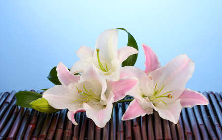 Pink lily flower on blue Stock Photo - 15726753