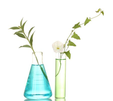 test-tubes with a colorful solution and plant isolated on white close-up photo