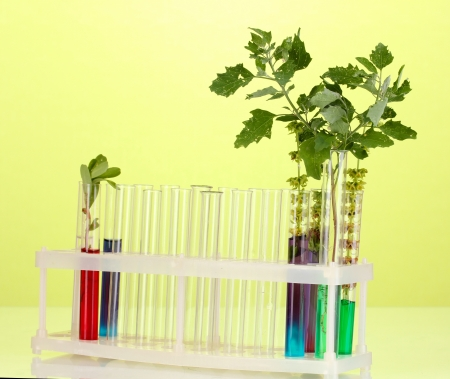 incubate: Test-tubes with a colorful solution and the plant on green background close-up