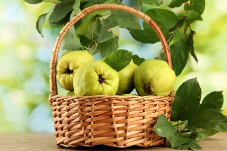 sweet quinces with leaves in basket, on green background Stock Photo - 15747999