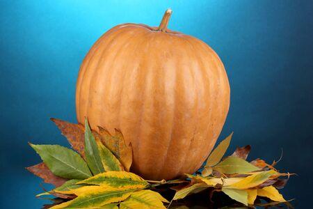 tuberous: Ripe orange pumpkin with yellow autumn leaves on blue background
