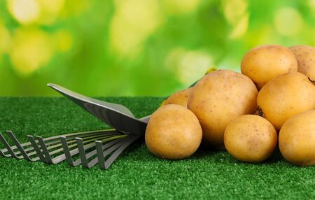Ripe potatoes on grass on natural background close-up Stock Photo - 15747159