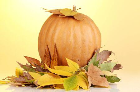 tuberous: Ripe orange pumpkin with yellow autumn leaves on yellow background Stock Photo