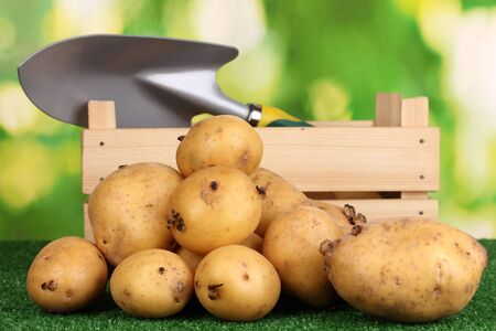 Ripe potatoes on grass on natural background Stock Photo - 15782082