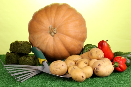 Ripe potatoes with pumpkin and pepper on grass on green background close-up Stock Photo - 15782335