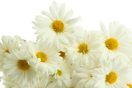 bouquet of beautiful daisies flowers, close up photo