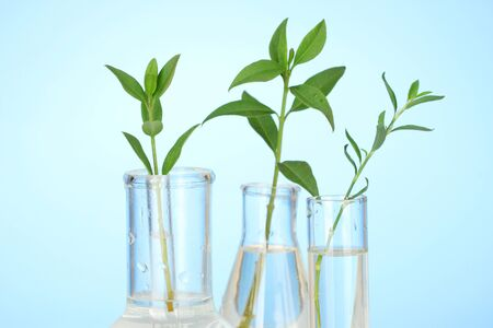 incubate: Test-tubes with a transparent solution and the plant on blue background close-up