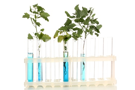 incubate: Test-tubes with a blue solution and the plant isolated on white background close-up
