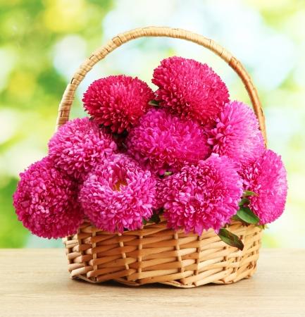 violet flower: pink aster flowers in basket on green background