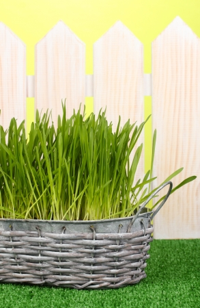 Green grass in basket near fence photo