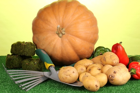 Ripe potatoes with pumpkin and pepper on grass on green background close-up Stock Photo - 15853825