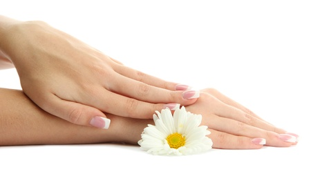 soft: Beautiful woman hands with camomile, isolated on white