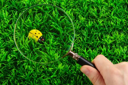ladybird and magnifying glass in hand on green grass Stock Photo - 15938352