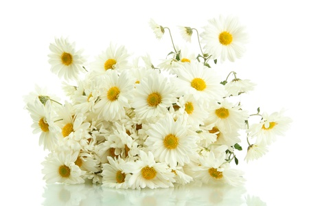 bouquet of beautiful daisies flowers, isolated on white photo