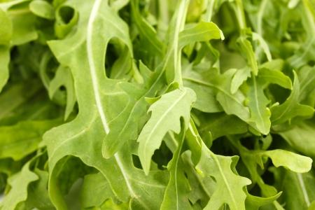 rocket lettuce: Fresh rucola salad or rocket lettuce leaves isolated on white
