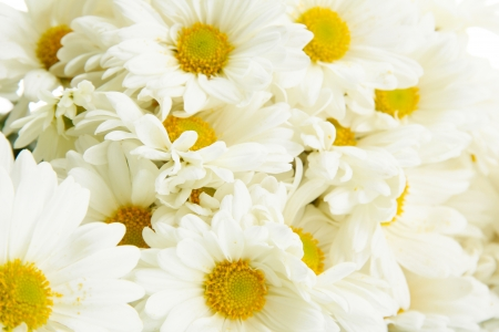 white daisy: bouquet of beautiful daisies flowers, close up