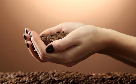 grano de cafe: manos femeninas con los granos de café, sobre fondo marrón Foto de archivo