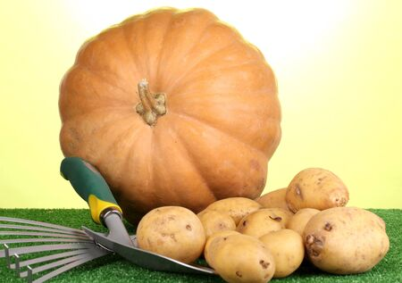 Ripe potatoes with pumpkin on grass on green background close-up Stock Photo - 15962053