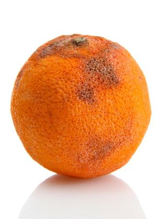 spoilage: Rotten orange isolated on white