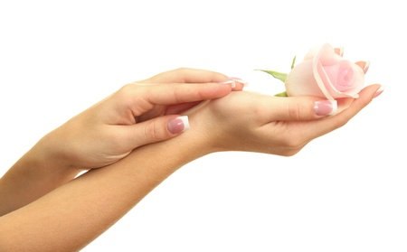 hands: Beautiful woman hands with rose, isolated on white Stock Photo