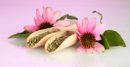 Purple echinacea flowers and dried herbs on pink background Stock Photo - 16106877