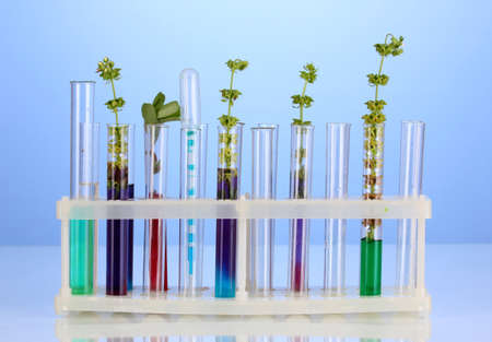 Test-tubes with a colorful solution and the plant on blue background close-up photo