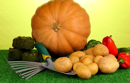 Ripe potatoes with pumpkin and pepper on grass on green background close-up photo
