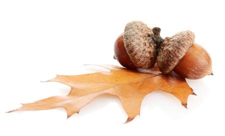 2 november: brown acorns on autumn leaf, isolated on white