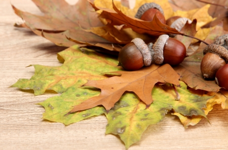 brown acorns on autumn leaves, on wooden background Stock Photo - 16196208