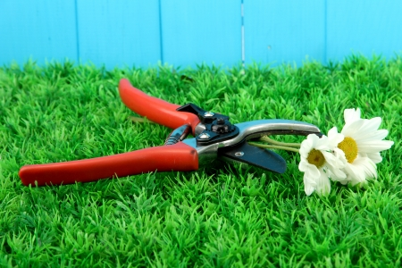 Secateurs with flower on grass on fence background Stock Photo - 16195265