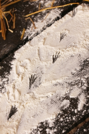 Traces of mouse on flour on wooden table photo