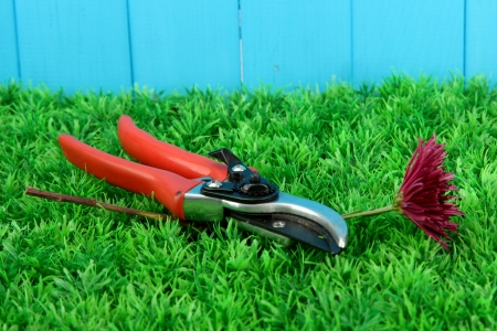 Secateurs with flower on grass on fence background Stock Photo - 16246108