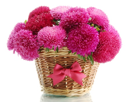 pink aster flowers in basket, isolated on white photo
