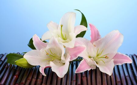 Pink lily flower on blue Stock Photo - 16277822