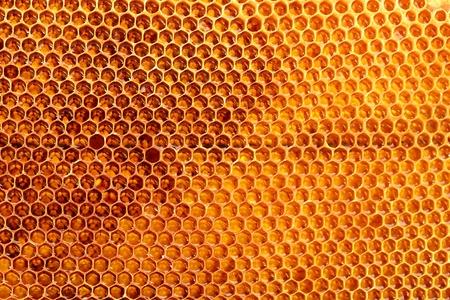 yellow beautiful honeycomb with honey, background photo