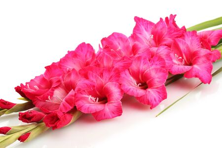 beautiful bouquet of pink gladioluses, isolated on white photo