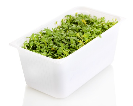 Fresh garden cress in white plastic box isolated on white photo