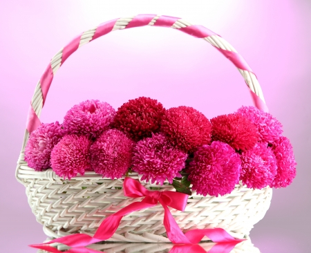 beautiful aster flowers in basket, on pink background photo