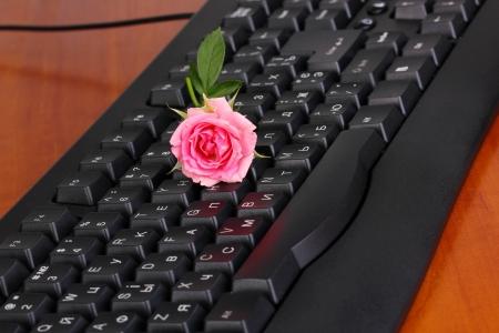 footsie: Pink rose on keyboard close-up internet communication