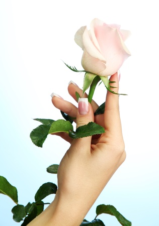 Beautiful woman hand with rose, on blue background photo