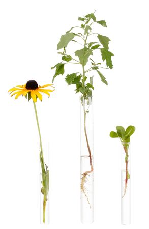 incubate: various plant in test-tube isolated on white