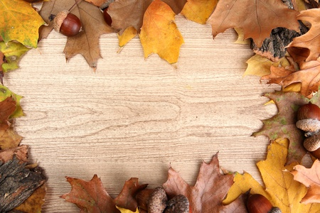 brown acorns on autumn leaves, on wooden background photo