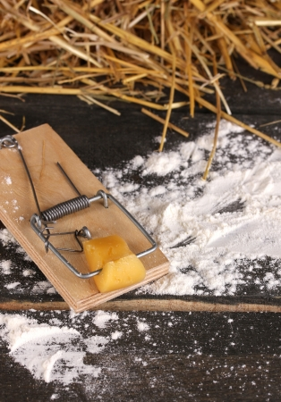 Mousetrap with a piece of cheese in barn on wooden background photo
