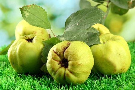 quinces: sweet quinces with leaves, on grass, on green background Stock Photo