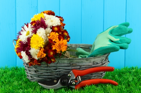Secateurs with flowers in basket on wooden background Stock Photo - 16414122