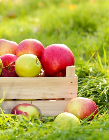 crate of fresh ripe apples in garden on green grass photo