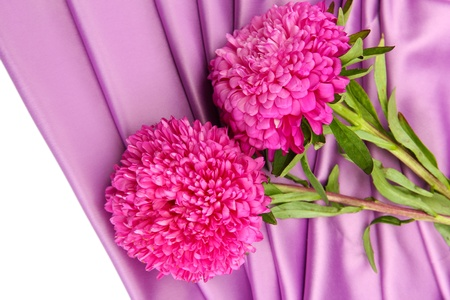 beautiful aster flowers, on silk background photo