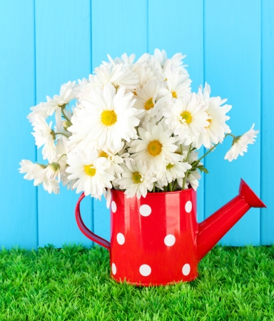 Flowers in vase on grass on blue background photo