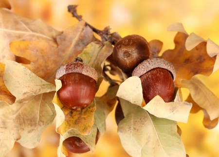 Autumnal leaves on bright background, macro close up